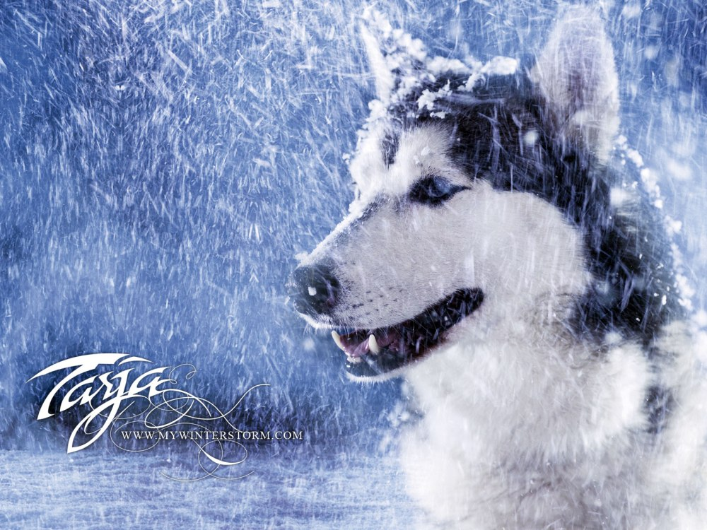 winter-storm-mara-deviantart_498842